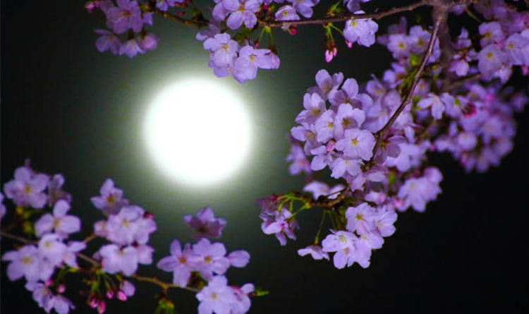 Flower Moon 2018 Spiritual Meaning What Does The May Full Moon Mean