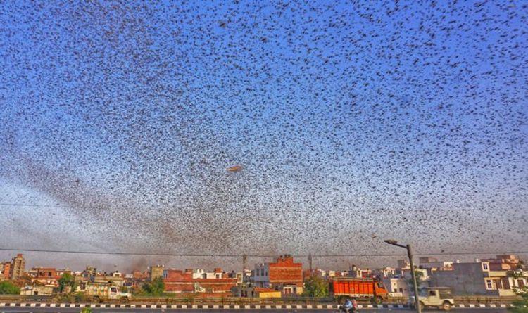 Bible bombshell: Terrifying video shows locust 'plague ...